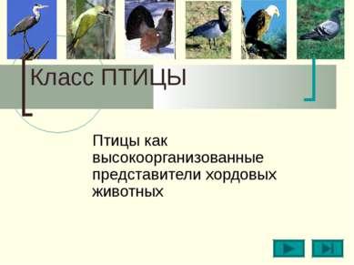 Класс ПТИЦЫ Птицы как высокоорганизованные представители хордовых животных