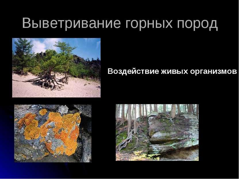 Выветривание горных пород Воздействие живых организмов