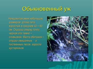 Обыкновенный уж Неядовитая змея небольших размеров: длина тела взрослых в сре...