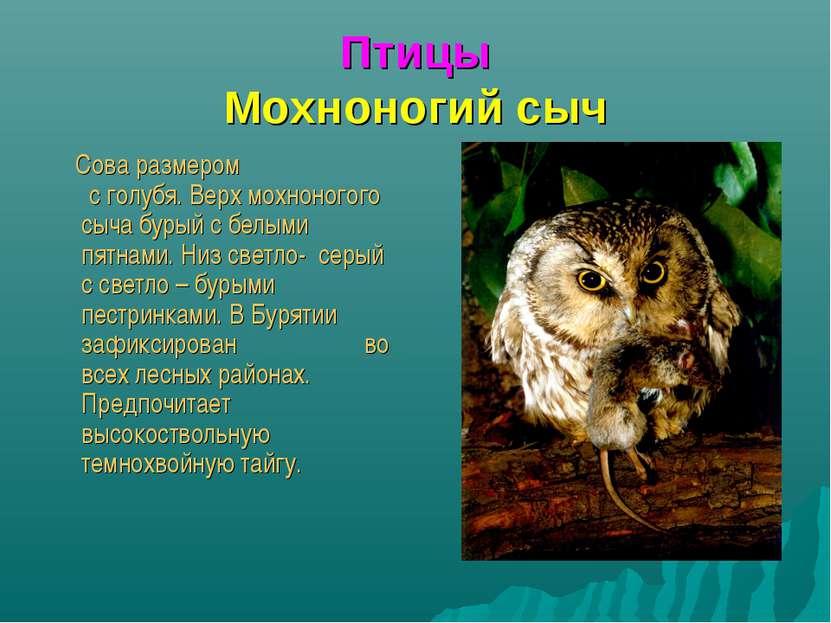 Птицы Мохноногий сыч Сова размером с голубя. Верх мохноногого сыча бурый с бе...