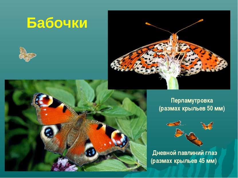 Бабочки Перламутровка (размах крыльев 50 мм) Дневной павлиний глаз (размах кр...