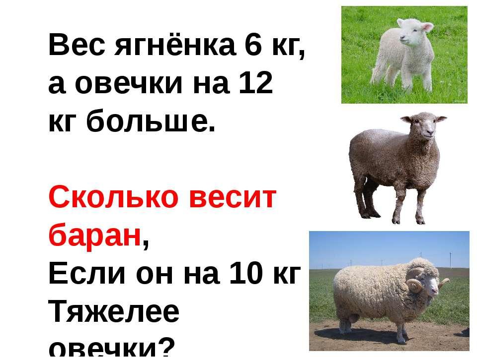 Вес ягнёнка 6 кг, а овечки на 12 кг больше. Сколько весит баран, Если он на 1...