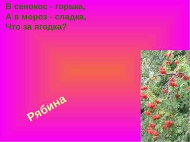 Рябина В сенокос - горька, А в мороз - сладка, Что за ягодка?