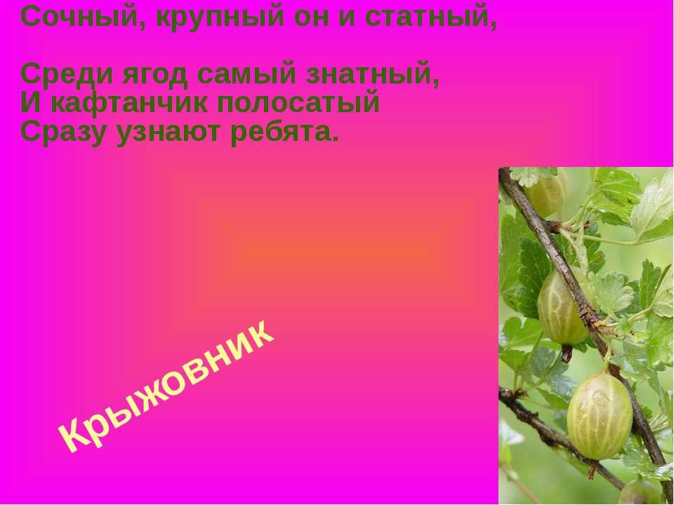 Крыжовник Сочный, крупный он и статный, Среди ягод самый знатный, И кафтанчик...