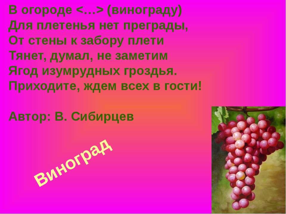 Виноград В огороде (винограду) Для плетенья нет преграды, От стены к забору п...