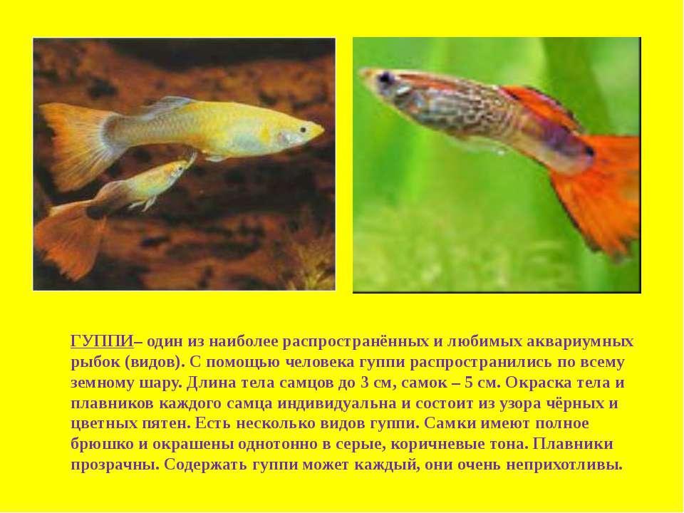 ГУППИ– один из наиболее распространённых и любимых аквариумных рыбок (видов)....