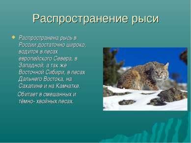Распространение рыси Распространена рысь в России достаточно широко, водится ...