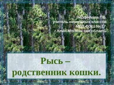 Рысь – родственник кошки. Перфилова Г.Б. учитель начальных классов МОУ-СОШ № ...