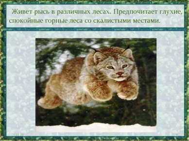 Живет рысь в различных лесах. Предпочитает глухие, спокойные горные леса со с...