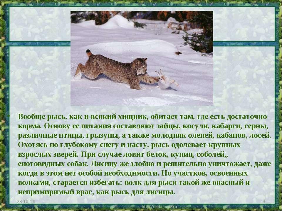 Вообще рысь, как и всякий хищник, обитает там, где есть достаточно корма. Осн...