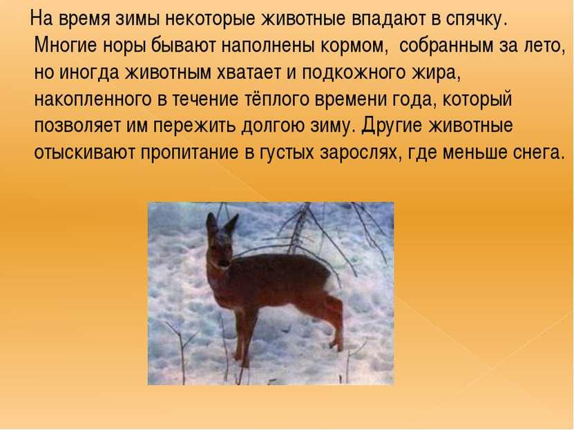 На время зимы некоторые животные впадают в спячку. Многие норы бывают наполне...