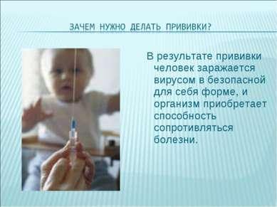 В результате прививки человек заражается вирусом в безопасной для себя форме,...