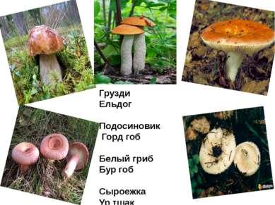 Грузди Ельдог Подосиновик Горд гоб Белый гриб Бур гоб Сыроежка Ур тшак