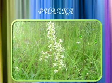 ФИАЛКА