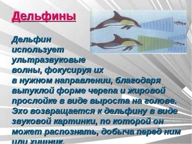 Дельфины Дельфин использует ультразвуковые волны, фокусируя их в нужном напра...