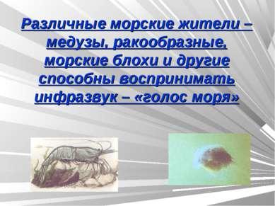 Различные морские жители – медузы, ракообразные, морские блохи и другие спосо...