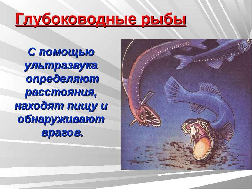 Глубоководные рыбы С помощью ультразвука определяют расстояния, находят пищу ...