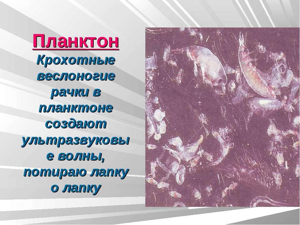 Планктон Крохотные веслоногие рачки в планктоне создают ультразвуковые волны,...