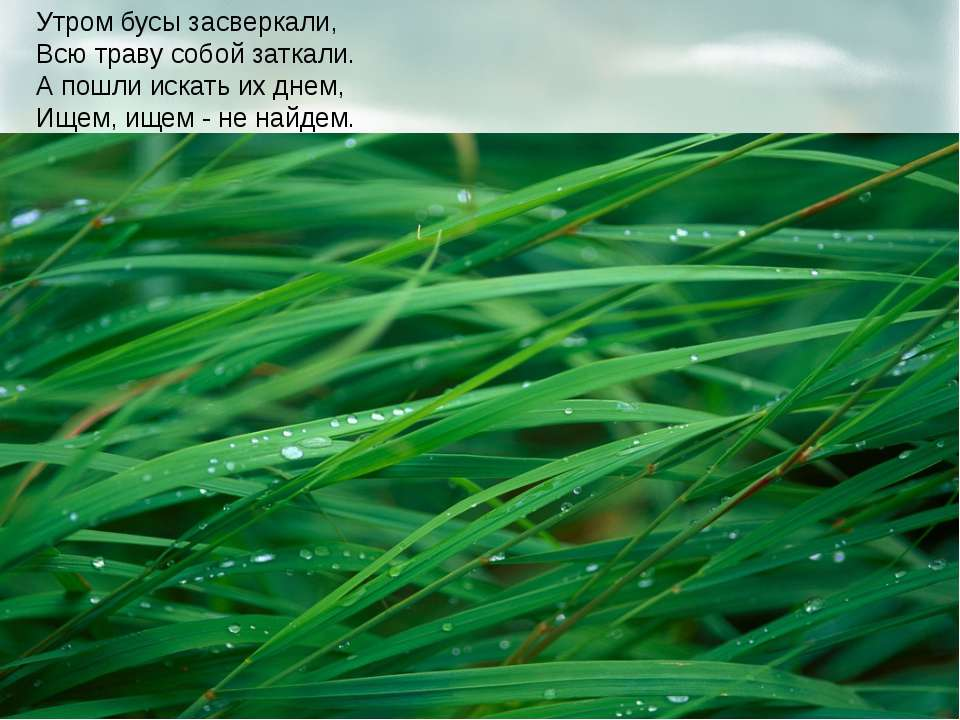 Утром бусы засверкали, Всю траву собой заткали. А пошли искать их днем, Ищем,...