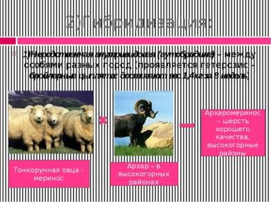 2)Гибридизация: 1)Неродственная внутривидовая (аутобридинг) – между особями р...