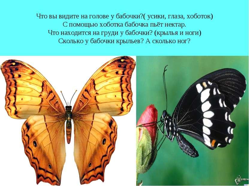 Что вы видите на голове у бабочки?( усики, глаза, хоботок) С помощью хоботка ...