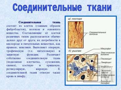 Соединительная ткань состоит из клеток (главным образом фибробластов), волоко...