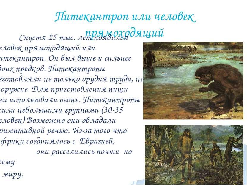 Питекантроп или человек прямоходящий Спустя 25 тыс. лет появился человек прям...