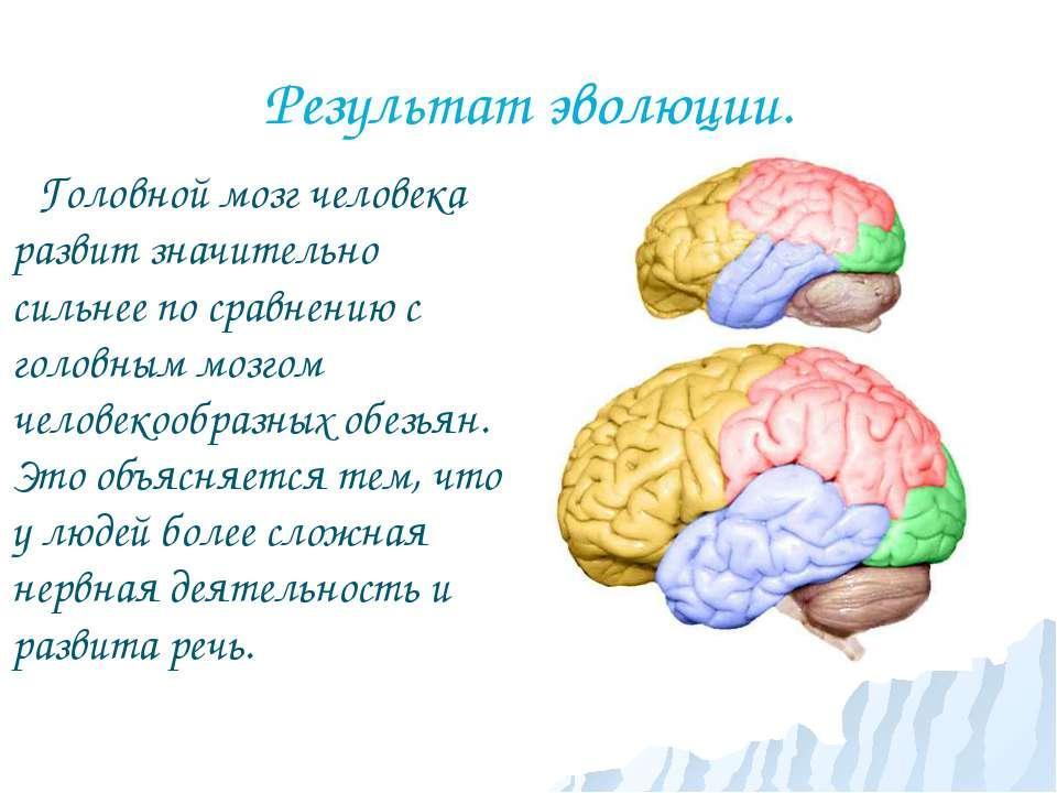 Результат эволюции. Головной мозг человека развит значительно сильнее по срав...