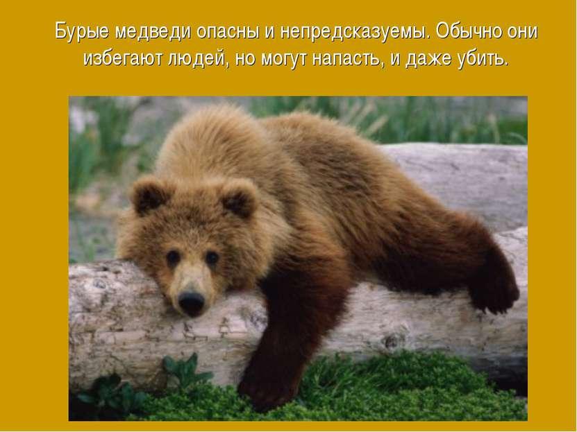 Бурые медведи опасны и непредсказуемы. Обычно они избегают людей, но могут на...