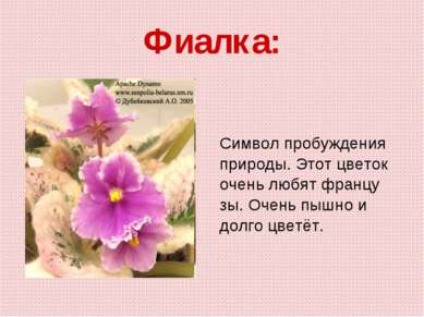 Фиалка: Символ пробуждения природы. Этот цветок очень любят францу зы. Очень ...