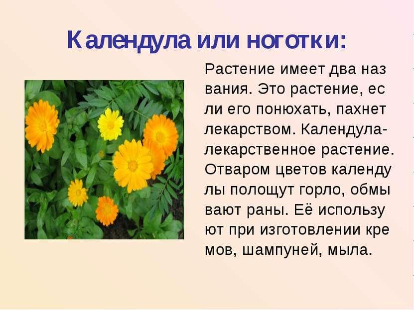 Календула или ноготки: Растение имеет два наз вания. Это растение, ес ли его ...