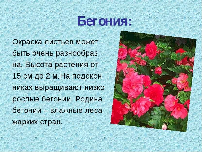 Бегония: Окраска листьев может быть очень разнообраз на. Высота растения от 1...
