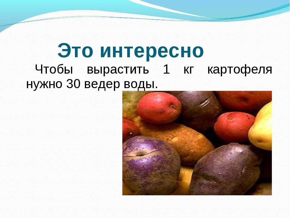 Чтобы вырастить 1 кг картофеля нужно 30 ведер воды. Это интересно