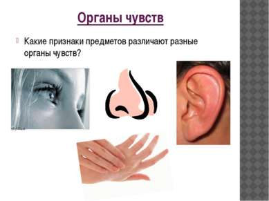 Органы чувств Какие признаки предметов различают разные органы чувств?