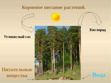 Корневое питание растений. Вода Питательные вещества Углекислый газ Кислород