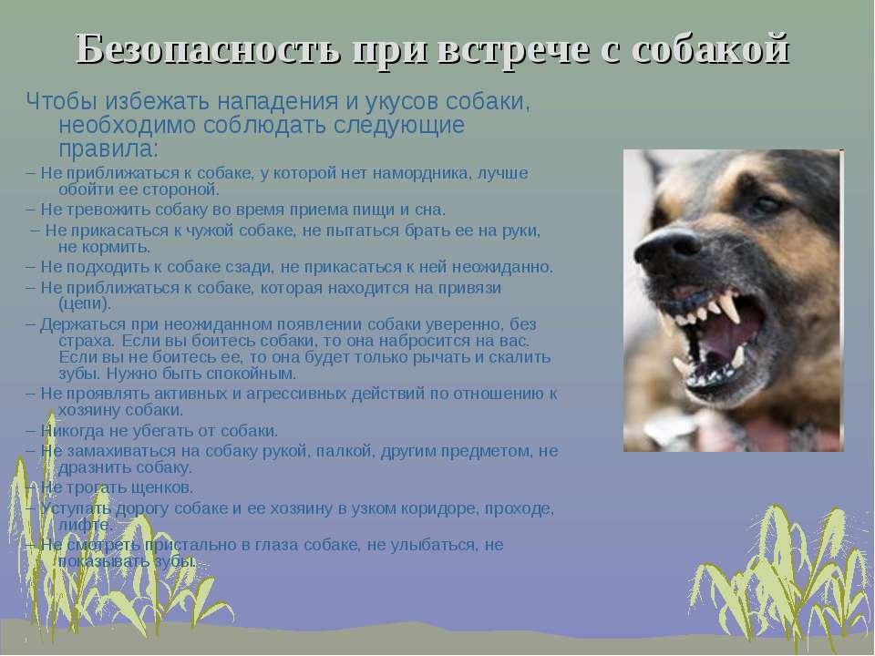 Безопасность при встрече с собакой Чтобы избежать нападения и укусов собаки, ...