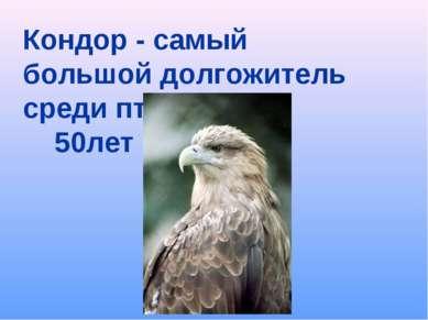Кондор - самый большой долгожитель среди птиц 50лет