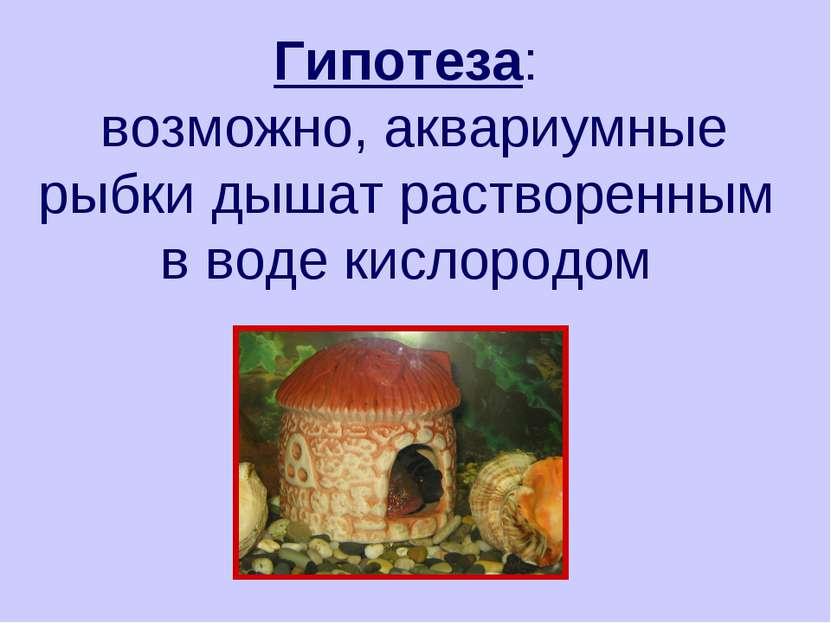 Гипотеза: возможно, аквариумные рыбки дышат растворенным в воде кислородом