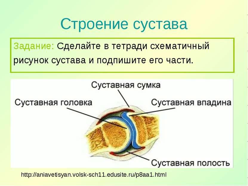 Строение сустава http://aniavetisyan.volsk-sch11.edusite.ru/p8aa1.html Задани...