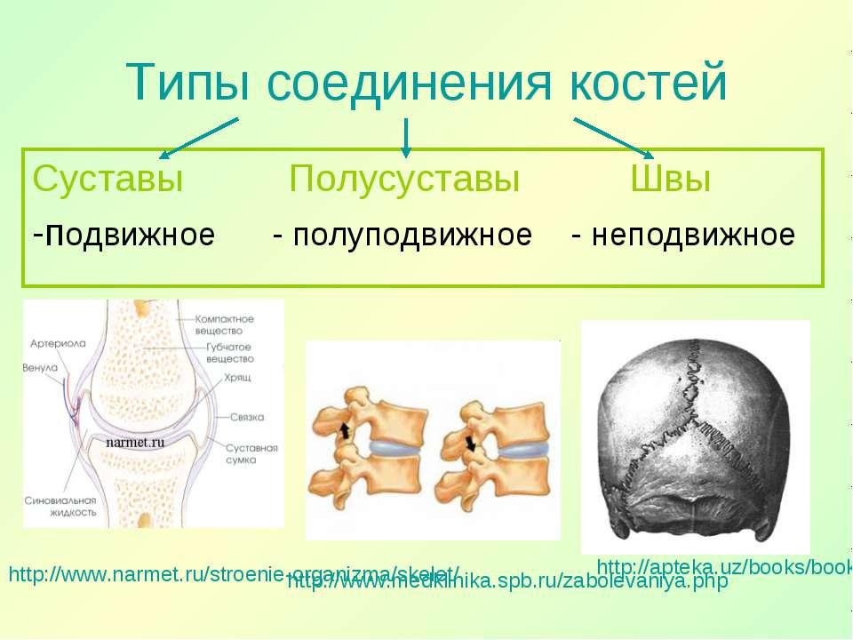 Типы соединения костей Суставы Полусуставы Швы -подвижное - полуподвижное - н...