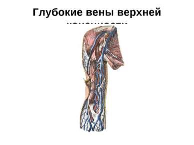 Глубокие вены верхней конечности
