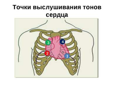Точки выслушивания тонов сердца 1 2 3 4