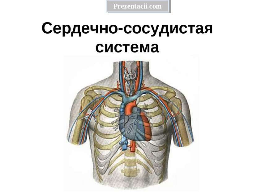Сердечно-сосудистая система Prezentacii.com