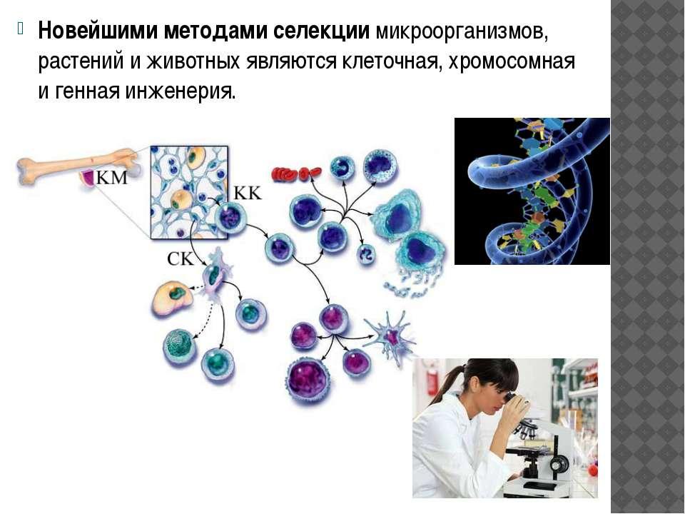 Новейшими методами селекции микроорганизмов, растений и животных являются кле...