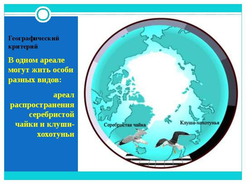 Географический критерий В одном ареале могут жить особи разных видов: ареал р...