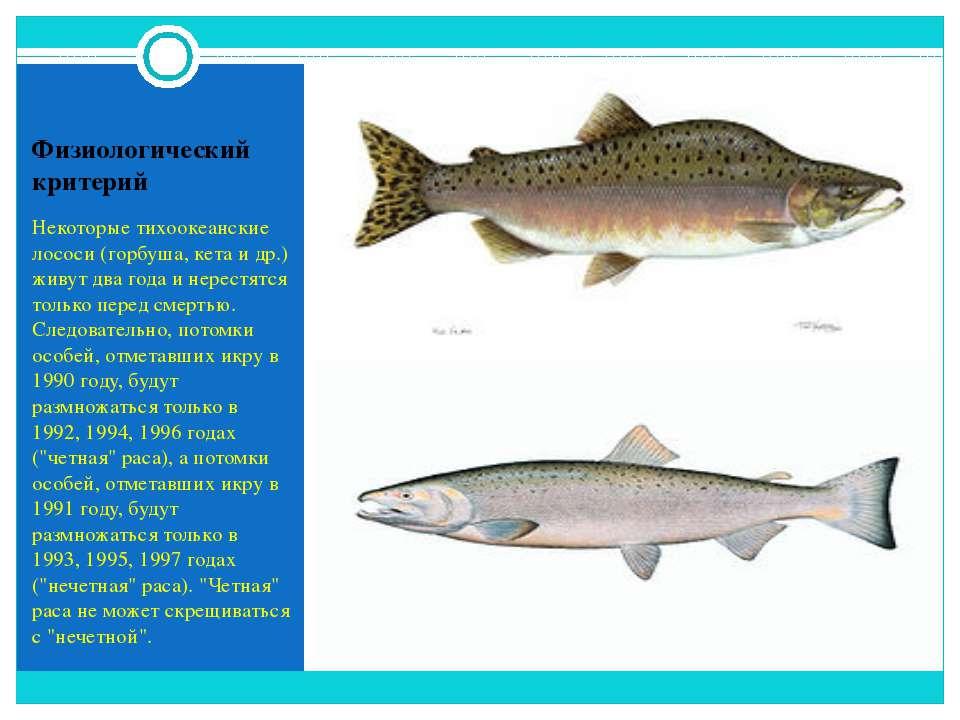 Физиологический критерий Некоторые тихоокеанские лососи (горбуша, кета и др.)...