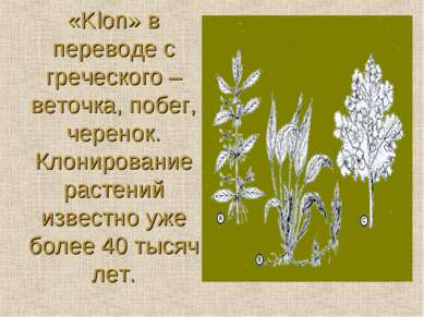 «Klon» в переводе с греческого – веточка, побег, черенок. Клонирование растен...