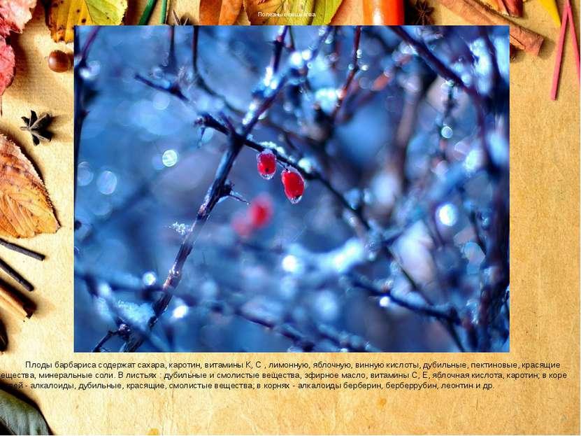 Полезные вещества Плоды барбариса содержат сахара, каротин, витамины К, С , л...
