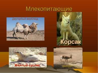 Млекопитающие Двугорбый верблюд Жёлтый суслик Корсак Джейран