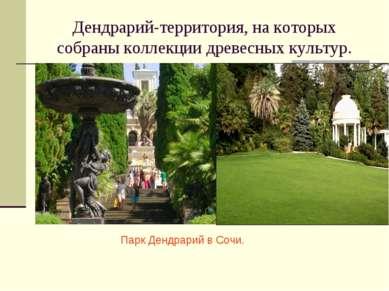 Дендрарий-территория, на которых собраны коллекции древесных культур. Парк Де...